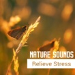 White Noise Therapy Nature Relaxation