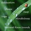 Sleep Sounds of Nature Gentle Rain on Pavement