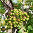 Yogatma Green
