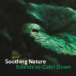 Nature Sounds for Sleep and Relaxation Piano Relaxation