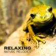 Nature Sound Collection Relax on Nature
