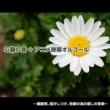 浜崎 vs 浜崎 さんぽ (『となりのトトロ』より) [心音入りオルゴールバージョン]