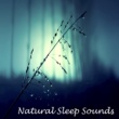 Meditation Music Zone Loopable Soft Rainfall for Sleep