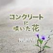 NUMM コンクリートに咲いた花