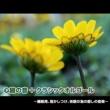 浜崎 vs 浜崎 アメイジング・グレイス (心音入りオルゴールバージョン)