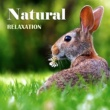 Nature Sounds Artists Easy Listening