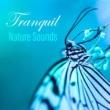 Nature Sound Collection Golden Shores