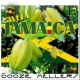 Coozie Mellers Sweet Jamaica