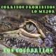 Raza Obrera Los Cocodrilos