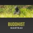 Meditation Yoga Chill