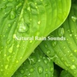 Rain Sounds Steady Showers