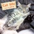 GT-K Cat life (2017 Ver.)