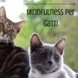 Zen Boutique Mindfulness per Gatti