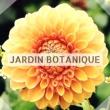 Jardin japonais Jardin Botanique