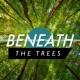 Deep Sleep Nature Sounds Beneath the Trees