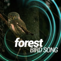 Forest Sounds Relaxing Spa Music Singing Birds Bird Life Behind the Barn