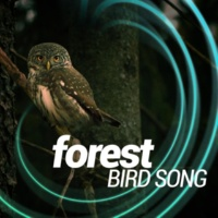 Forest Sounds Relaxing Spa Music Singing Birds April Woodland