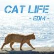 GT-K Cat life (EDM Ver.)