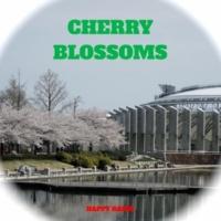 Happy Radio CHERRY BLOSSOMS