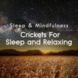 Sleepy Times/Nature Ambience/Night Sounds Crickets for Sleep and Relaxing (Sleep & Mindfulness)