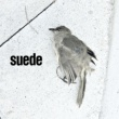 Suede The Invisibles