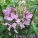 丹凡 仙仁 Flowers#01