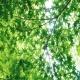 自然の音 蝉の声