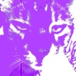 Pavlovin Kissa Taikuri