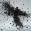 Aimer Black Bird