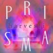 Pijall/Yona/Kalifornia-Keke Harvesti (feat.Yona/Kalifornia-Keke)