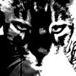 Pavlovin Kissa Saudade