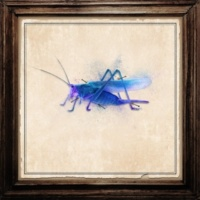 Payao Grasshopper