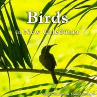 自然音, サウンド・コラボ 小鳥のさえずり ~ニューカレドニア