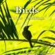 自然音, サウンド・コラボ 熱帯雨林の朝 ~ニューカレドニア サラメア~
