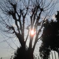 西中島きなこ Sunbathe(Remastered)
