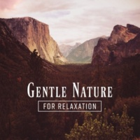 Sounds of Nature Relaxation Gentle Nature for Relaxation
