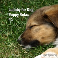 ezHealing Lullaby for Dog, Puppy Relax Vol.1