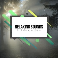 Easy Sleep Music, ambiente, Sleeping Music Experience 12 Relaxing Sounds to Calm your Brain