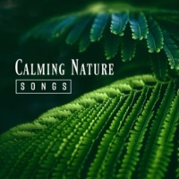 Nature Sound Series Calming Nature Songs