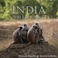 自然音, サウンド・コラボ インド ~野生動物と自然~