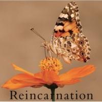 Neverland Reincarnation 【通常盤B】