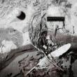 デヴィッド・シルヴィアン Secrets Of The Beehive [Remastered 2003]
