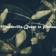The Bulbine for Indian Mandevilla Queen to Pentas