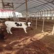 SAMTT farming