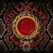 Whitesnake Flesh & Blood