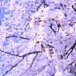 Yuri Itoh Dancing Bloom