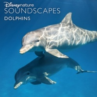 Disneynature Soundscapes Coral Reef, Bubbles, Passing Fish, Dolphin Squeaks
