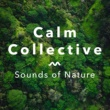 Calm Collective Ocean Waves