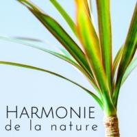 Zen Shiatsu Musique de Massage Spa Unité Harmonie de la nature - Sons de pluie, Ambiance de la nature, Musique d'ambience, Détente & Relaxation