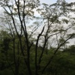 miduno 自然音 - 富士宮 - 野鳥01A#2 (バイノーラル)